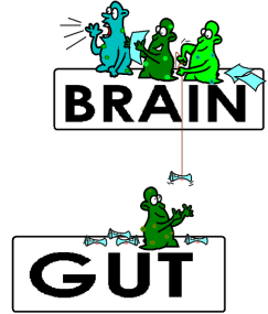 gut-bacteria-controlling-brain