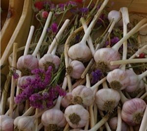 Garlic mom pic